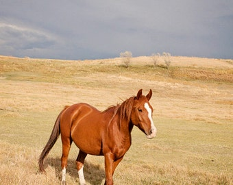 Horse in Landscape Photograph, Color Horse Wall Art, Western Country Photography, Physical Print
