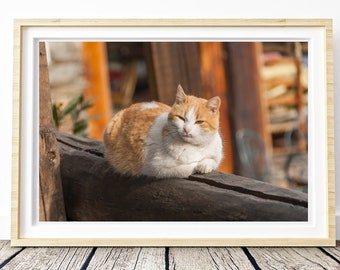 Sweet cat.  Photo. Landscapes of Spain. Sun and light. Printable image for download. From Spain with Love