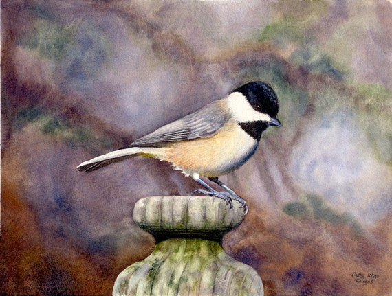 Black Capped Chickadee Watercolor Painting Print By Cathy