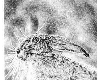 Hare print. Limited edition black and white. 'March Hare #1' (15x15) Limited to 20 only. Unmounted