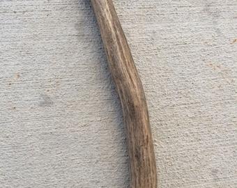 Antler dog chew stick