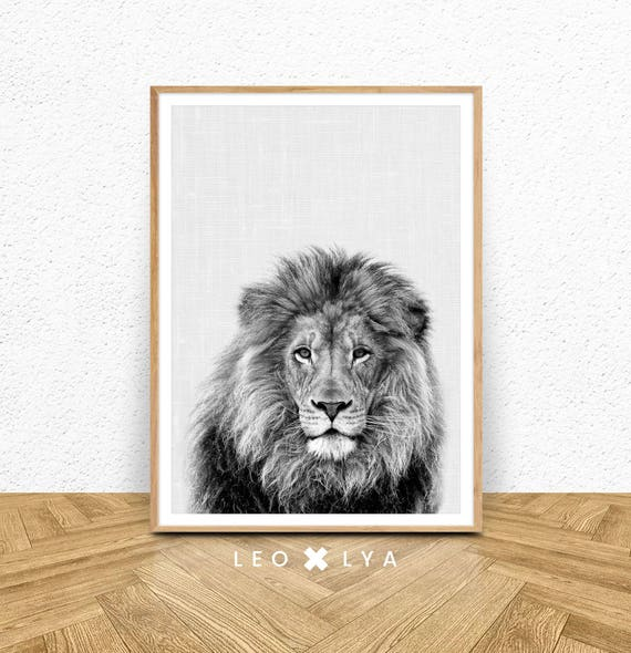 Black and white lion print lion wall art large poster