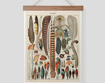 Vintage French Print of Feathers Pull Down Chart