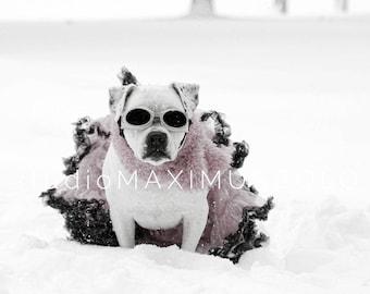Maximusbolo's The Snow Pibble Wood Print