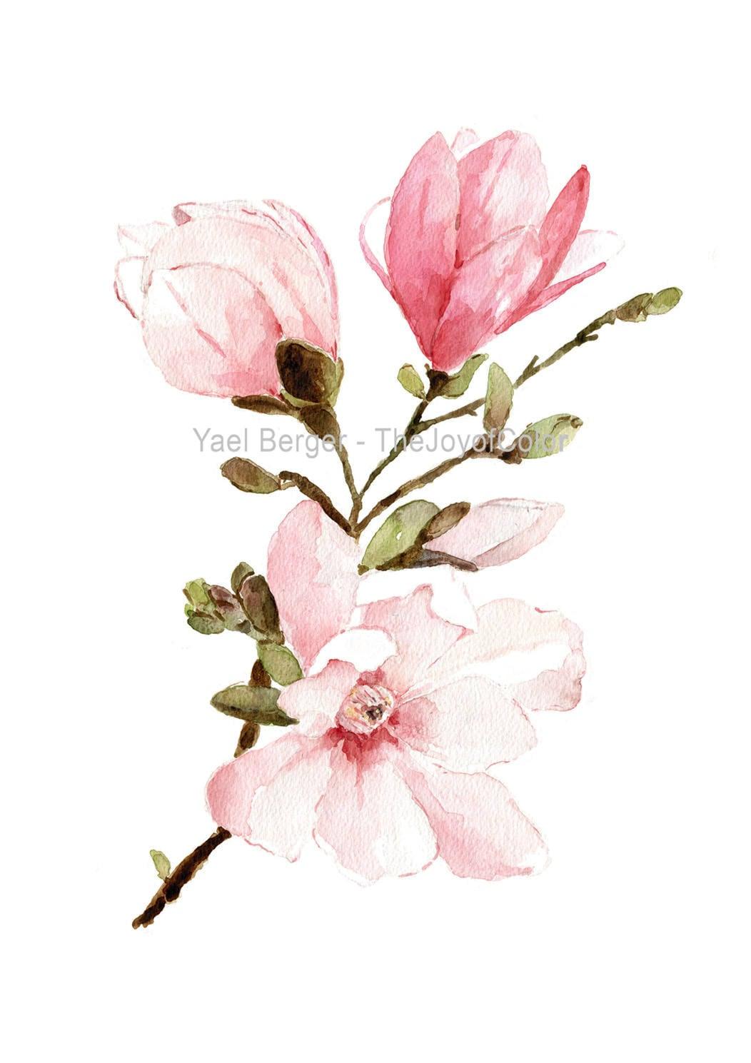 Fleurs de magnolia aquarelle aquarelle de fleurs de mongolie for Aquarelle fleurs