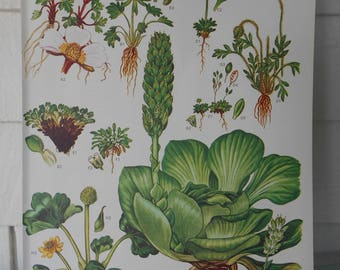 "Botanical, Original 9X12"" Book Page (Plate #1) from ""Wild Flowers of the World"""