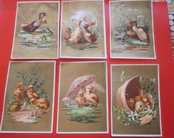 5 antique french advertising chromo 1885