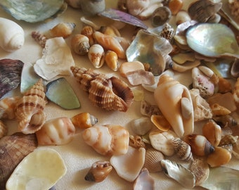 Shell Fragments, Beach Finds