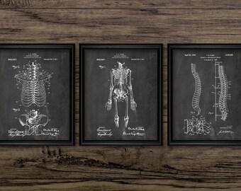 Human Skeleton Anatomy Print Set Of 3 - Anatomy - Medical Student - Doctor - Medical Education - Set Of Three Prints #2086 -INSTANT DOWNLOAD