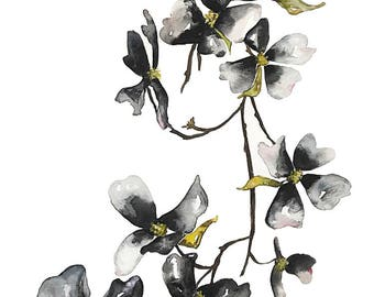 black watercolor flower painting, dogwood blossoms, watercolor print