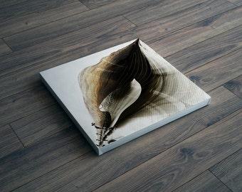 Triton Seashell Designs Art - seashell art print - square canvas / modern art canvas / wall hanging / wall decor