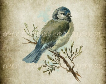 Vintage Bird Illustrations - INSTANT DOWNLOAD -  BIRD 04  -  8 x 10 inches in size -3.50