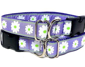 Lavender dog collar, purple DAISIES, tag collar, dog collar, house collar, buckle collar, purple dog collar, daisies dog collar