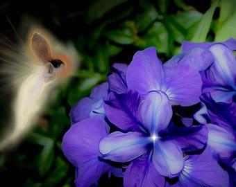 Iris Visits the Wild Irises