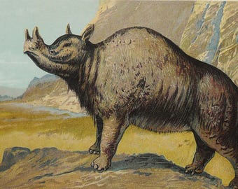 1900 Antique lithograph of an ANCIENT RHINOCEROS: The MEGACEROPS. North American extinct animal. Dinosaur. 118 years old print