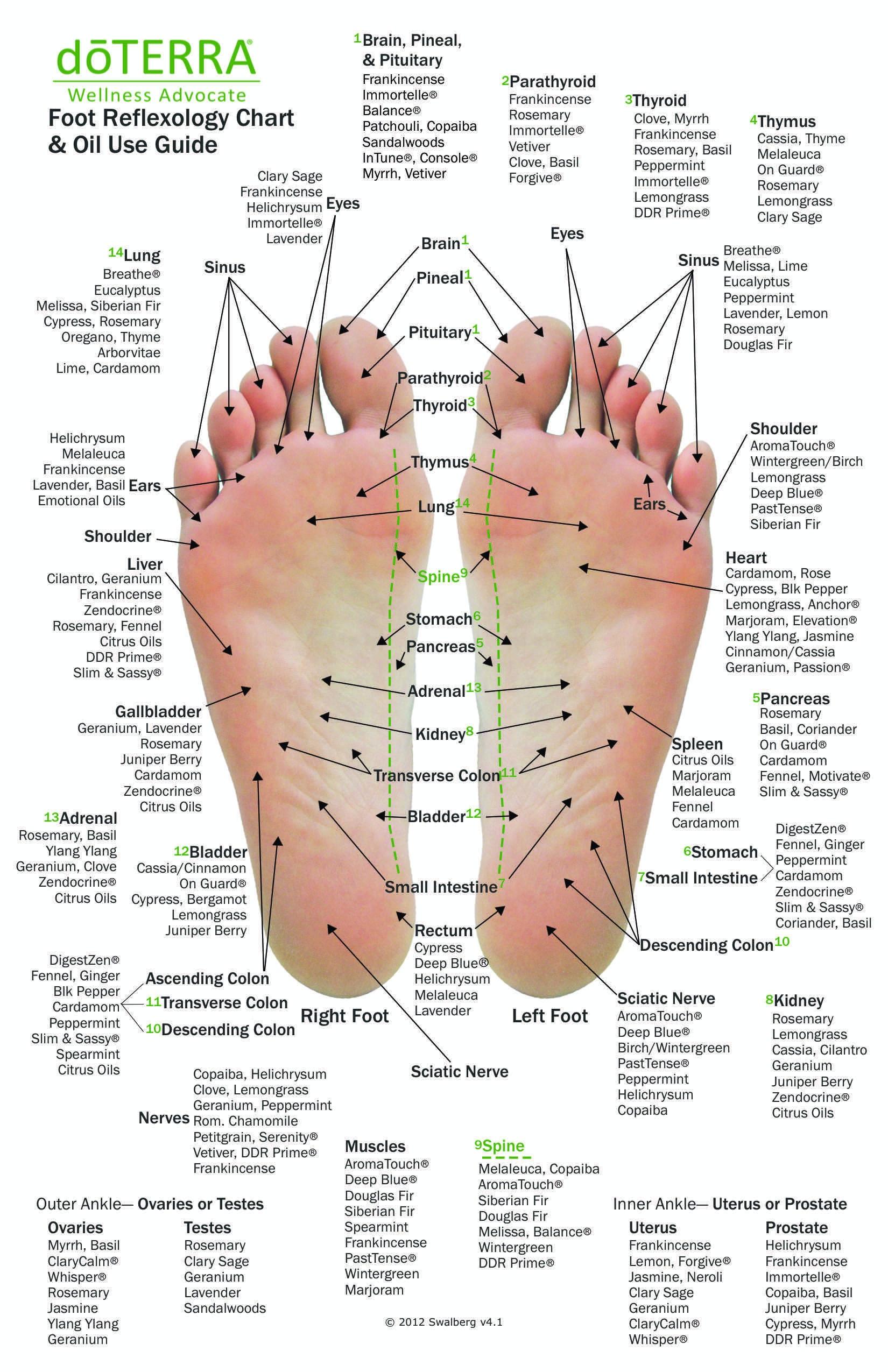 Foot Reflexology Chart Manual Guide