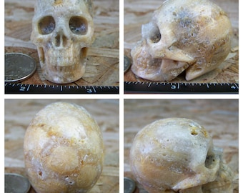 """2.0"""" 2.7oz 76.4g Coral Fossil Skull Realistic Crystal Healing Magical Magick Metaphysical Mystic Reiki Wicca Large Yellow 2 inch SK1105"""
