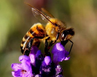 Life Cycle of A Bee Download
