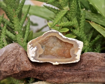 Chalcedony after Coral Specimen from Tampa Bay, Florida - Wiccan Altar Supplies - Healing Stone - Chalcedony Specimen - Wicca Altar Supply