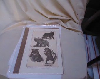 Vintage Bear Illustration From Magazine or Book, collectable