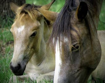 Mare and foal - Matted Print