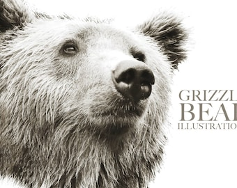 Grizzly Bear Wildlife Illustration - JPG and VECTOR formats - downloadable art - XL format 22 x 22