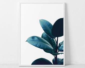 Ficus Print, Fig Tree Print, Ficus Elastica, Botanical Print, Botanical Poster, Scandinavian Print, Herb Prints, Tropical Leaf Poster.