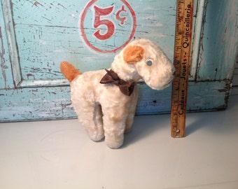 Old dog Teddy