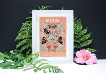 Moths Natural History Print - A4 or A3 Artists Print