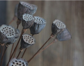 14 PCS Dried Lotus Pods on Stems, Rustic Decor, Home Decor