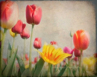 Red Tulips Flower Photography, yellow gray beige spring decor, vintage inspired spring garden photo - 8x10