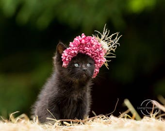 5x7 Black kitten in flower crown photography print