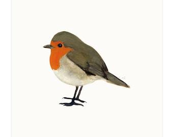 print | birds - Robin
