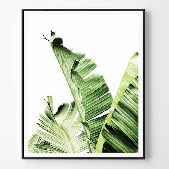 banana leaf print leaf photography tropical plant photo