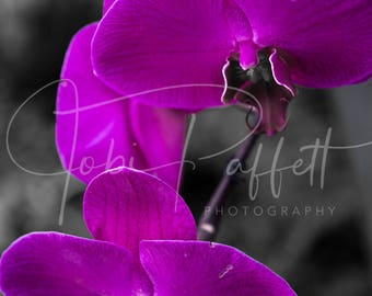 Purple Orchid Digital Print