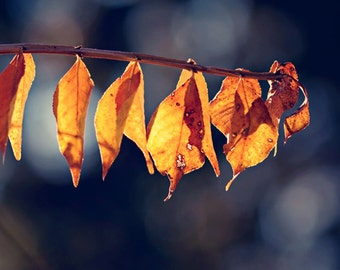 Fathers Day Dad Fall Autumn rustic photography rust brown home decor for him men dude macro of leaves photograph blue tones - fine art print