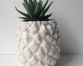 SOLD OUT /// plaster pineapple pot /// handcast plaster pineapple pot with haworthia