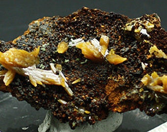 Wulfenite crystals on matrix, Mexico - Mineral Specimen for Sale