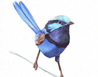Blue Wren watercolor painting -W066- print of watercolor painting 5 by 7 print wall art print - bird art print