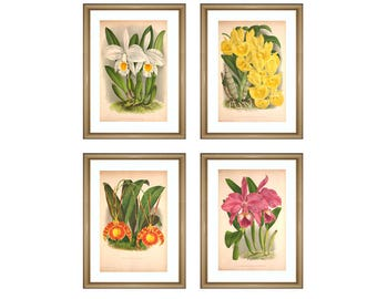 Orchid Flowers Print - Wall Art Decor - Flowers Botanical Print - Orchid Flowers Gallery - Kitchen Wall Art - Living Room Decor - Set of 4