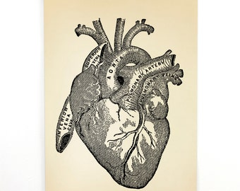 Pull Down Chart - Vintage Anatomy Reproduction Print. Human Heart Educational Biology Diagram Poster Cardiology Health Doctor- CP101CV