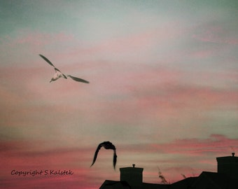 Sunset Sky Photograph Birds Sky Landscape Gray Pink Blue Wall Art Lovely Sunset Lit Sky Photograph 8x10