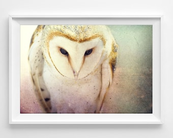 "Barn Owl Photograph Unframed / dreamy fairy tale forest woodland / mint pink pastel fantasy art / photography print /  ""A Little Bit Lost"""