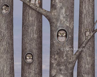 owls in trees - illustration art print 8X10 inches, owl birds of prey sycamore maple trees fall autumn gray blue nature picture