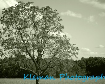 Tree on a Country Road #1 11x14 Matte-READY TO SHIP