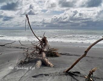Driftwood Beach. New Zealand. A4  Mounted