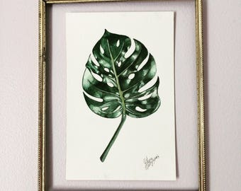 Philodendron botanical watercolor