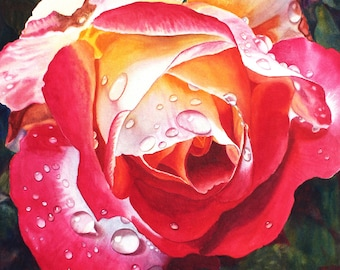 Red Yellow Rose Art Watercolor Painting Print by Cathy Hillegas, raindrops on roses, double delight rose art, 12x14.5 watercolor floral prin