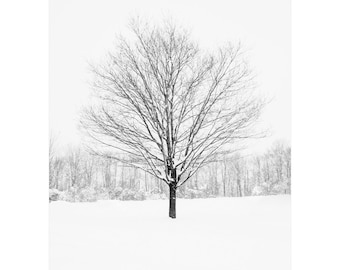 Black and white photograph of a tree in winter. Large landscape print. Dining room accent wall decor. Nature lover gift for ski lodge.