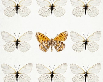 "Butterflies - Nature Photography, Spring Decor, Garden Art, Nursery Wall Art, Minimal Fine Art Photography, 8x8 ""Not Like the Others"""